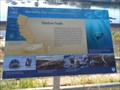 Image for Harbor Seals  -  Monterey, CA