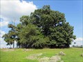Image for Copse of Trees - Gettysburg, PA