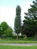 Image for Dibden Purlieu Pine tree