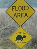 Image for Turtle Crossing - CBEC, Grasonville, Md.