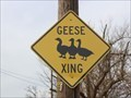 Image for Geese Crossing - Muenster, TX