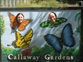 Image for Butterfly cutout at Callaway Gardens