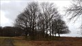 Image for Patrick A Taylor Trees - Bradgate Park, Leicestershire
