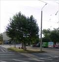 Image for Connewitz: Am Kreuz fehlt ein Baum