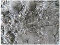 Image for Fossiles ordoviciens de Montréal (Qc) Canada