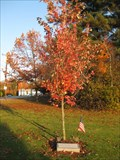 Image for FDNY 911 Memorial Tree - Hudson, NH