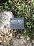 Image for Petrified Log - Menlo Park, CA