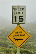 Image for Newt crossing