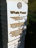 Image for Whale Fossil - Mission Viejo, CA
