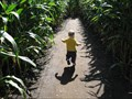 Image for Sever's Corn Maze