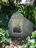 Image for Caesar the Gorilla – Los Angeles Zoo, CA