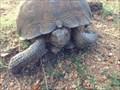 Image for Desert Tortoise Crossing, Pima County, AZ