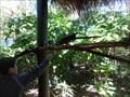 Image for Feeding the Macaws  -  Miami, FL