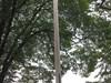 the symbolic Bear Flag pole