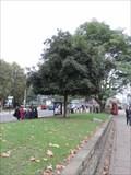 Image for Millennium Evergreen Holm Oak - Lambeth Palace Road, London, UK