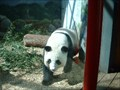 Image for Zoo Atlanta