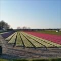 Image for Panorama Gooweg - Noordwijkerhout (NL)