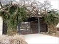 Image for Faux Bois Trees - San Antonio, TX USA