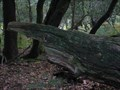 Image for Tapir Log - Nr Highland Water, New Forest, South Hampshire, UK
