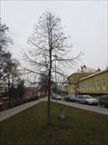 Image for Millennium Tree - Blansko, Czech Republic
