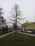 Image for Millennium Tree - Blansko, Czech Republic