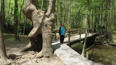 veritas vita visited Nature Trail Troll