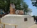Image for Petrified Wood - Washington, D.C.
