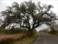 Image for Live Oak County Charter Oak - George West, TX