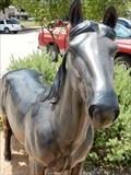 Image for American Quarter Horse - Comanche, TX