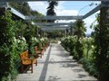 Image for Rose Garden Pergola at the Royal Botanic Garden - Sydney, Australia