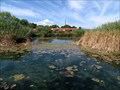 Image for San Solomon Springs (Balmorhea State Park, Texas)