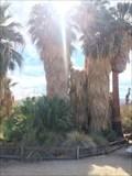 Image for Oasis of Mara - Joshua Tree, CA