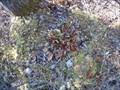 Image for Beaver Lake Nature Center - Bog Trail Pitcher Plants - Baldwinsville, N.Y.