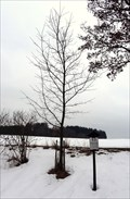 Image for Millenium Tree, Horni Branna, Czech Republic