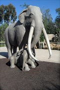 Image for Extinct Columbian Mammoth  -  San Diego, CA
