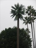 Image for Talking Palm Tree - Costa Mesa, CA