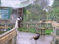 Image for Virginia Lake Aviary. Wanganui. New Zealand.