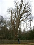 Image for Knightwood Oak - Bolderwood Ornamental Drive, Hampshire, UK