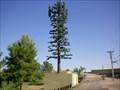 Image for Pseudopine in Harmony Park - Mesa, AZ