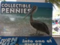 Image for Pelican - Smasher - SeaWorld, Orlando, Florida.