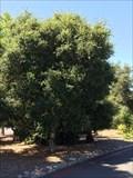Image for Leroy Coiper - San Rafael, CA