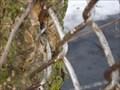 Image for Fence eating tree - Altoona, Pennsylvania