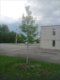 Image for September 11 Dedicated Tree - Kinburn, Ontario