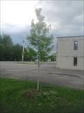 Image for September 11 Dedicated Tree - Kinburn, Ontario