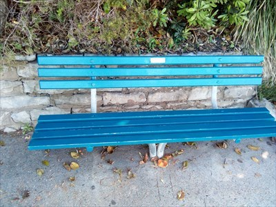 This Dedicated Bench.