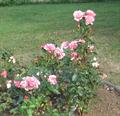 Image for Memorial garden, Résurrection - Orcines - France