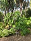 Image for Horton Hibiscus - Florida Botanical Gardens - Largo, FL