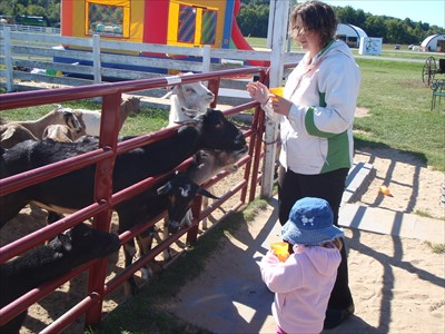 Feed The Goats Cows And Pigs Old Mcdonald S Farm Sackets Harbor New York Feeding The Animals On Waymarking Com