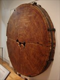"Image for Douglas-fir ""Tree Cookie"" at the Royal Ontario Museum, Toronto Ontario"