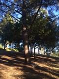 Image for Mrs. Louis A. Kozel - Costa Mesa, CA